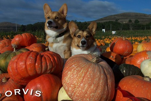 Orvis Cover Dog Contest - Winston and Lilly