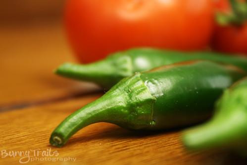 257-salsa harvest
