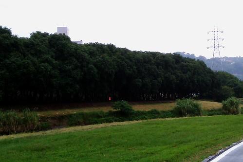 回程看到對面樹林