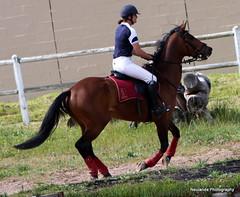 Allegra and Dan (neulands) Tags: horses cheval september hunter pferde 2010 showjumping springreiten neulandstud damanddyke