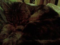 tonic. (zwergenprinzessin) Tags: cats pets handy linz austria nokia kitten telephone cellphone gin tonic 2010 cellphonecamera nokiae51 summer2010 2010september