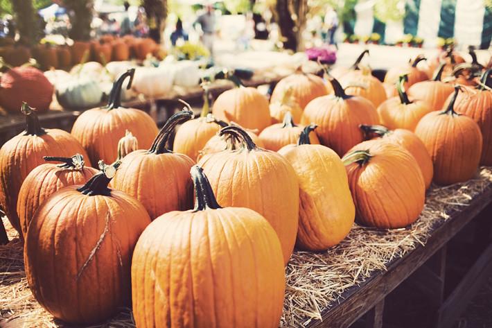 Harvest_fallblog4