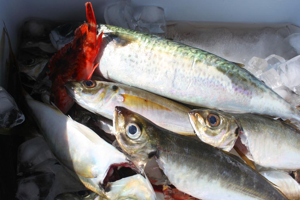 A Diary of Fishing-Kanazawa Hakkei (10)