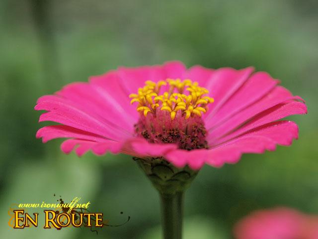 A Flower at the Botanical Garden
