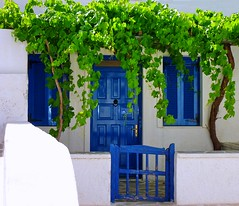 Facade with vine (Marite2007) Tags: door blue house green window leaves architecture wooden pretty village details vine greece shutters picturesque chora cyclades climbingvine kythnos colorphotoaward goldstaraward