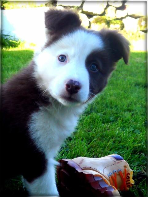 Pip's ears!
