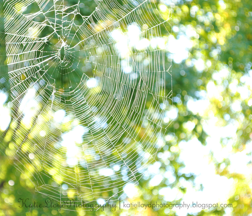 Spider-web-1---wm