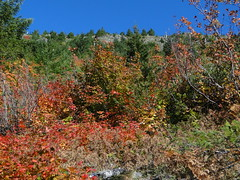 Fall colors on Shriner Peak trail.