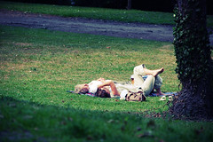 sunbathing (Insane Focus) Tags: road woman man art nature girl grass photoshop photography photo insane nikon focus couple photographer belgium image artistic pics sleep snapshot picture snap sunbathing lige lightroom goy d80 insanefocus photographicshot