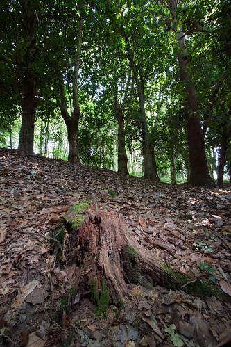 O Bosque.