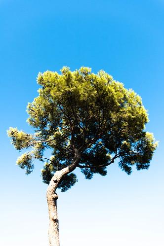 match tree