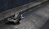 A small part of the story (Aaron Webb) Tags: street broken japan tokyo shoes highheel calendar 日本 東京 gutter tokyojapan 谷中 東京都 japanday4 くつ brokenheels とうり