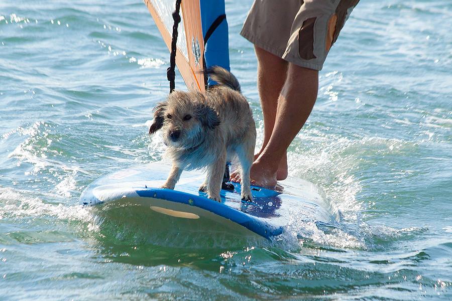 surf-dog