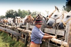 La gente de trabajo (Eduardo Amorim) Tags: horses horse southamerica criollo caballo uruguay cheval caballos cavalos pferde cavalli cavallo cavalo pferd pampa hest hevonen chevaux  amricadosul hst uruguai  amriquedusud   sudamrica suramrica amricadelsur  sdamerika crioulo caballoscriollos criollos   americadelsud tacuaremb  crioulos cavalocrioulo americameridionale caballocriollo eduardoamorim cavaloscrioulos iayayam yamaiay fiestadelapatriagaucha departamentodetacuaremb pampauruguaio pampauruguaya
