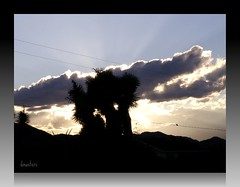 lonesome dove (dagutzyone ) Tags: sunset sky nature weather clouds desert scenic joshuatree valley yucca cloudscapes mojavedesert thunderstorms yuccavalley hidesert 92284 dagutzyone cloudsstormssunsetssunrises