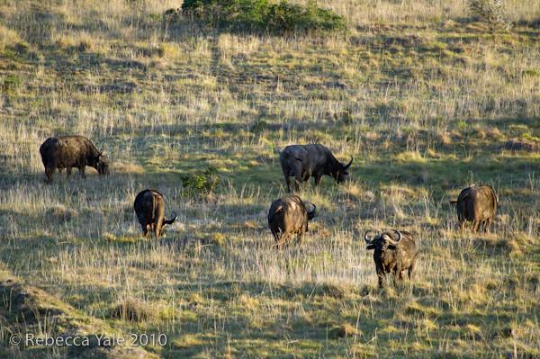 RYALE_SA_National_Park_Addo_79