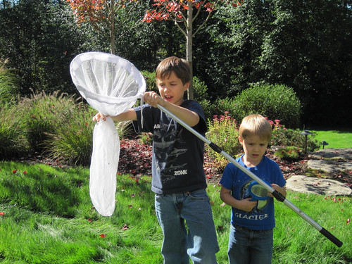 Catching a dragonfly