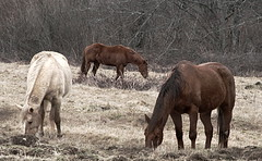 3 horses (collg1958 (AWAY FOR A WHILE)) Tags: horses animals three washington pacificnorthwest feed
