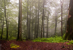 mysterious, misty dream! (M@@nʎ) Tags: trees mist tree green misty forest woods warm pentax dream jungle mysterious dreamy mazandaran ایران roberta namakabrood namakabroud مه srgb مازندران k100d justpentax نمکآبرود pentaxart dedicatiom
