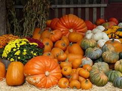 Fall Colors (docentjoyce) Tags: fallcolors pumpkins autumncolors seecanyon docentjoyce califcentralcoast gopherglennapplefarm