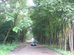 531007 เตาเผาถ่านกรมป่าไม้ 012