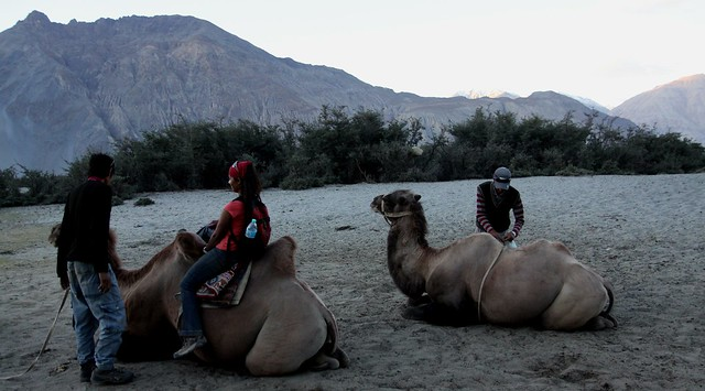 Bactrian Camel Ride at Hunder