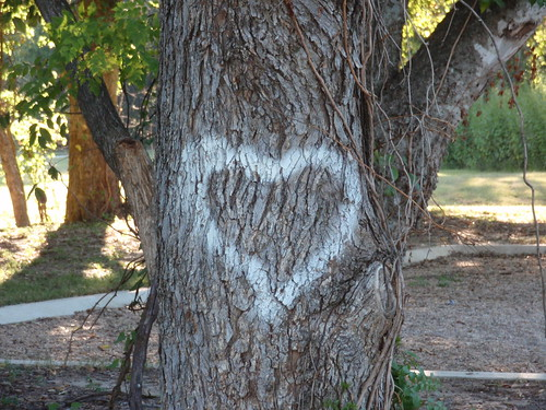 Yes I Love Trees