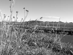 ingvellir 4 oktber 2010 (Ester Sveinbjarnardottir) Tags: autumn sky white mountain fall iceland nationalpark fragility photographycloud estersv outdoorsicelandingvellir mountainnopeoplegrassestersv daybwimagebeautyinnaturenonurbansceneflower