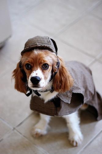 Watson is Sherlock Holmes