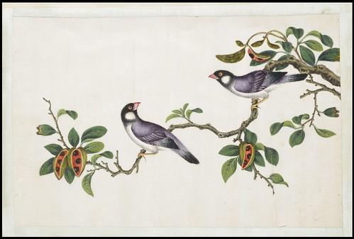 Bird Album a
