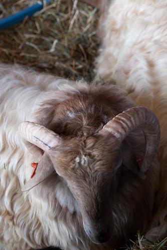 Ram 2010