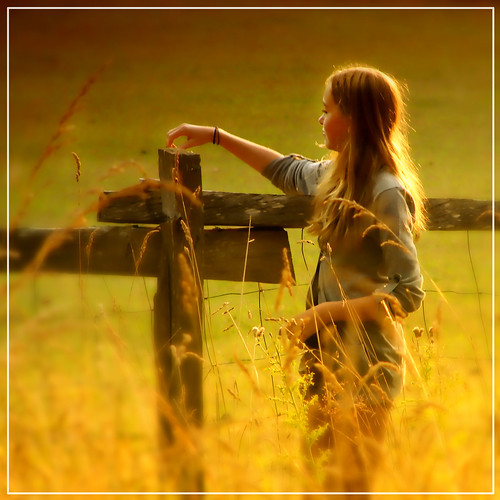 The golden summer light in the field
