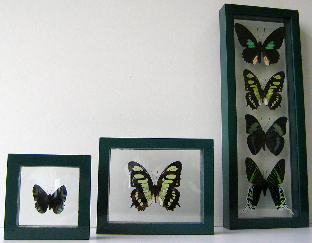 Series of Green Butterflies for Green decorating ideas