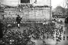 La chica de las palomas (David A Córdova M) Tags: bw 35mm turkey photography photo foto shot picture nb bn ave palomas fotografia amateur turquia pigon davidcordova deividcordova
