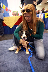 2010 AKC Meet the Breeds (ccho) Tags: show dog mountain cat akc entlebucher americankennelclub entlebuchermountaindog meetthebreeds