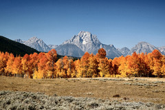 DELICIOUS AUTUMN ... (Aspenbreeze) Tags: autumn trees mountain mountains fall bravo seasonal wyoming grandtetons tetons autumntrees colorsofautumn mtmoran tetonmountainrange aspenbreezes aspenbreeze gpsetest