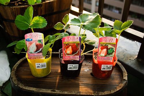 My garden 0107 September 18, 2010