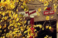 Fall (Dadschaen) Tags: autumn light sun tree germany pub october hamburg leafs astra kneipe faall beijanni