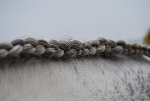 closeup diamond braided mane