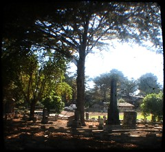 El Carmelo Cemetery, Pacific Grove, CA (Not Calm (dot com)) Tags: pacificgrove ttv throughtheviewfinder kodakbrowniereflex elcarmelocemetery