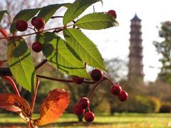 Pagoda, Kew Gardens (Laura Nolte) Tags: park autumn kewgardens kew garden westlondon royalbotanicgardens