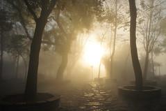 Sislerin içinden (Atakan Eser) Tags: mist tree misty fog scene istanbul sis sisli manzara ağaç çamlıca kartpostal dsc7445