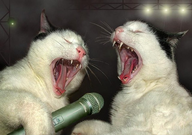 唱得還真陶醉