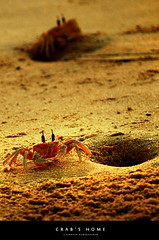 |Explored| Crabs Home (Subhash Kumarapuram) Tags: sea food beach home living sand hole crab shore crabs subhash nikond200 tripleniceshot subhashkumarapuram