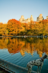 New York from the Park (m.gruber) Tags: park city nyc dog ny newyork water buildings centralpark