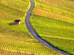 Weinbergweg (olipennell) Tags: vineyard weg wein weinberg weinstadt