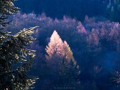 Sonnenschein im November! (H.B.Koch) Tags: november trees light sun forest germany deutschland licht hessen sonne wald bume taunus anawesomeshot hbkoch