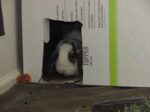 betsy in the box (blurry)