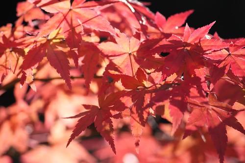 秋真っ盛り, KAYEDE