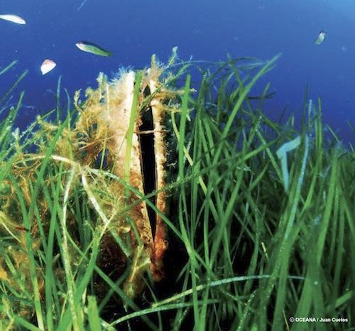 5186464023 d0d1462ac5 Habitats en peligro - H�bitats en Peligro ? Arrecifes de Moluscos